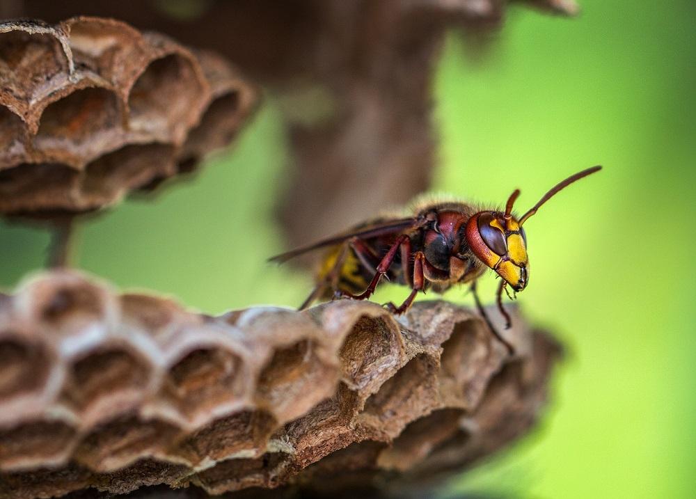 スズメバチの駆除は業者に依頼するべし!その理由やメリットを徹底解説