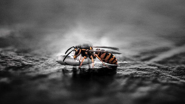 アシナガバチの駆除は業者に依頼!自力ではなく業者に依頼する理由とは
