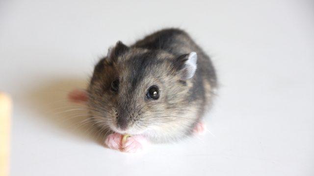 ネズミ駆除は「ラットサイン」が目印!ラットサインの意味と見つけ方について