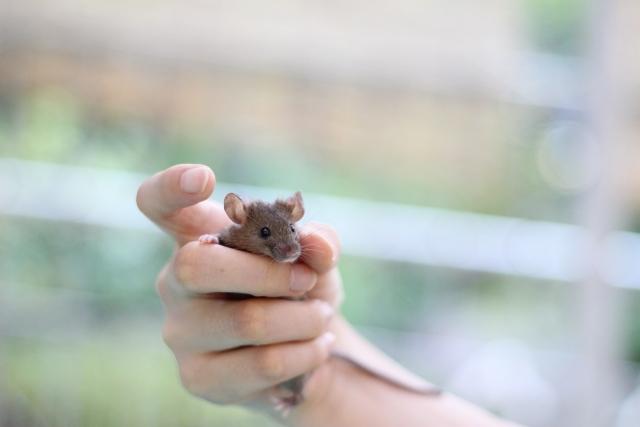 ネズミ対策の3大方法「追い出す」「捕獲する」「殺す」を比較