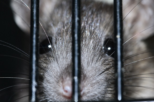 ネズミを追い出すことに成功したら「侵入経路を塞ぐ」ことを忘れずに!